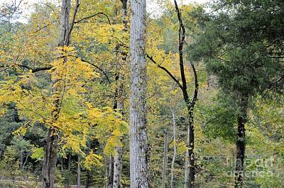 Photograph - October Gold At Tannehill by Maria Urso