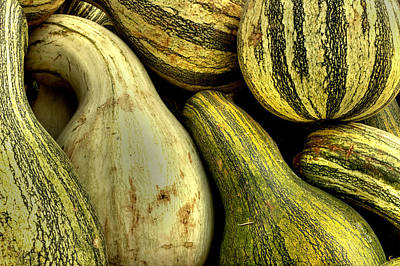 Squash Photograph - October Gourds by Michael Eingle