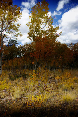 Photograph - October In Colorado by Ellen Heaverlo