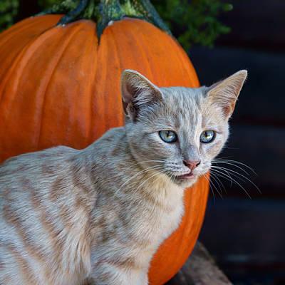 Photograph - October Kitten #3 by Nikolyn McDonald