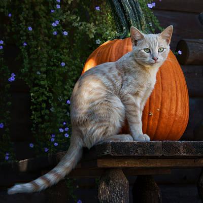 Photograph - October Kitten #4 by Nikolyn McDonald