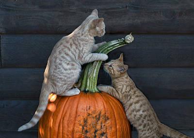 Photograph - October Kittens by Nikolyn McDonald