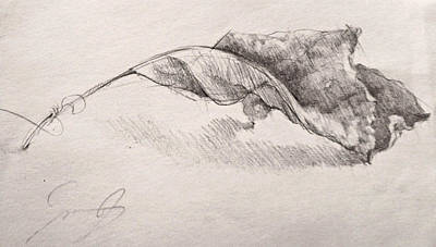 Still Life Drawings - October Leaf by Jason Rafferty