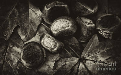 Photograph - October Leaves And Chestnuts by Wilma  Birdwell