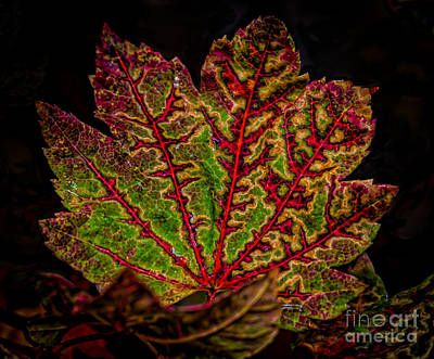 The Bunsen Burner - October Leaves  by Mitch Shindelbower
