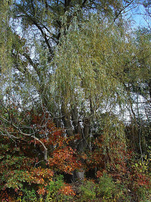 Photograph - October Meets The Oak And Tempts The Willow by Terrance DePietro