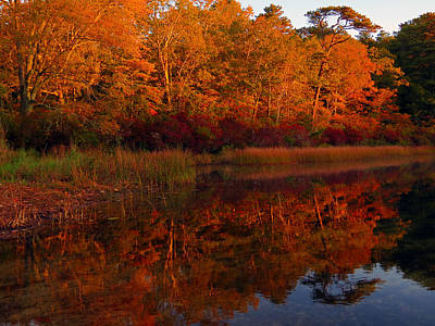 Gallery Website Photograph - October Mirror by Dianne Cowen