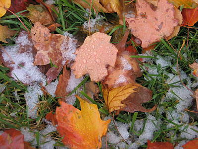 Photograph - October Snow by Mark C Ettinger