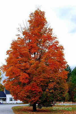 Photograph - October Tree by Eunice Miller