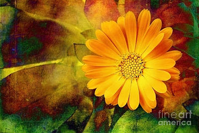 Photograph - October Zinnia by Ellen Cotton