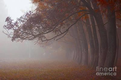Photograph - Octobers Walk by Bernadett Pusztai
