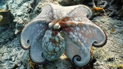 Octopus Posing Art Print