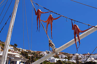 Photograph - Octopus Trio Hanging In Mykonos Greece by Phil Cardamone