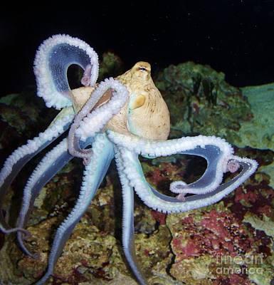 Octopus Waikiki Art Print