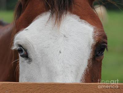 Photograph - Odd Eyed Horse by Carol McCutcheon