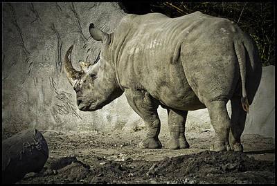 Michigan Detroit Zoo Photograph - Odd-toed Rhino by LeeAnn McLaneGoetz McLaneGoetzStudioLLCcom