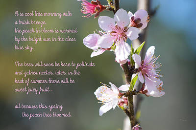 Photograph - Ode To A Peach Blossom Spring by rd Erickson