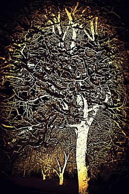Photograph - Ode To Klimt Tree by Jodie Marie Anne Richardson Traugott          aka jm-ART