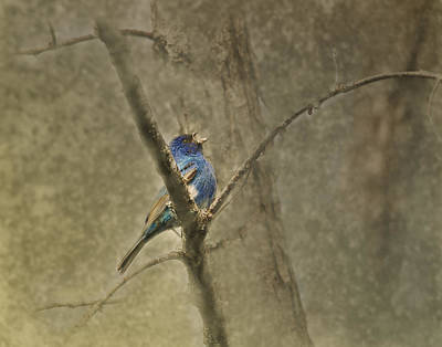 Indigo Buntings Wall Art - Photograph - Ode To Spring by Susan Capuano