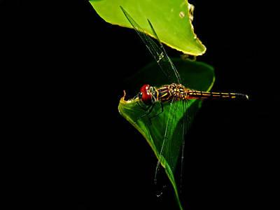 Odonata Painting - Odonata Threat Of Rain by Susan Duda