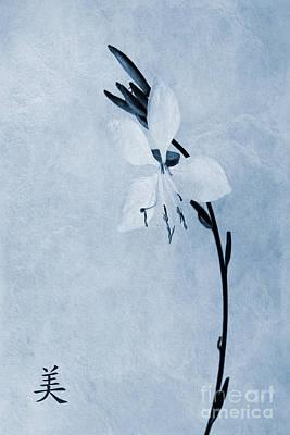 Oenothera Lindheimeri Cyanotype Art Print by John Edwards