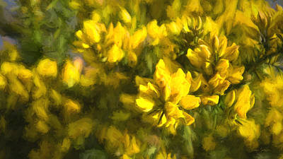 Photograph - Of Gorse by Dan Sabin