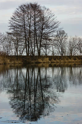 Photograph - Of Mirrors And Trees by Georgia Mizuleva