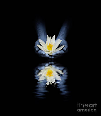 Hands Images Photograph - Offering Of The Lotus by Tim Gainey