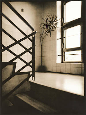 Flight Of Stairs Photograph - Office Plant by Alexander Kurganov