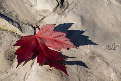 Photograph - Oh Canada Maple Leaf by Georgia Mizuleva