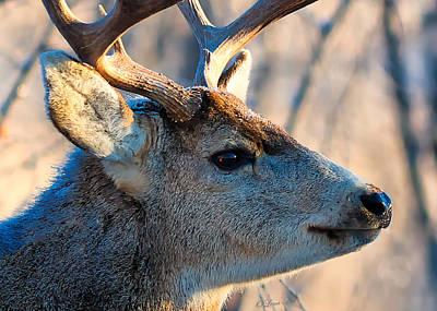 Photograph - Oh Dear Deer by OLena Art Brand