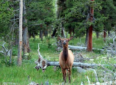 Photograph - Oh Dear I See A Deer by Ausra Huntington nee Paulauskaite