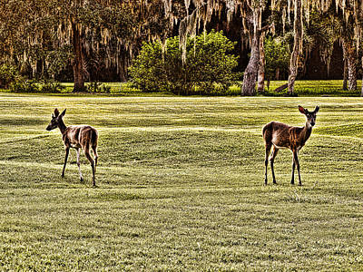 Photograph - Oh Deer by Oscar Alvarez Jr
