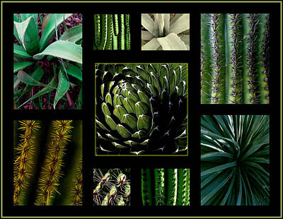 Photograph - Oh My Cacti by Marlene Burns