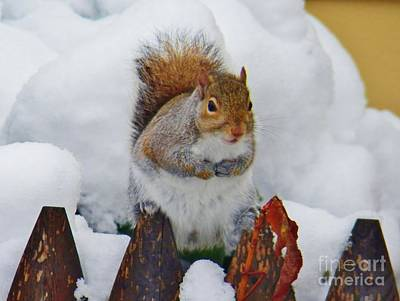 Photograph - Oh No   Early Snow by Judy Via-Wolff