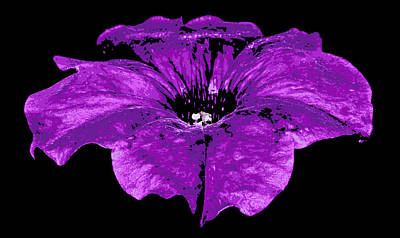 Photograph - Oh Petunia.... by Tammy Schneider