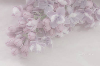 Lilacs Photograph - Oh So Gentle - Lilac Sprig Macro  by Sandra Foster