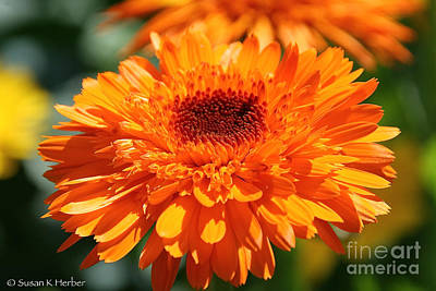 Photograph - Oh So Orange by Susan Herber