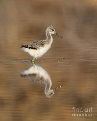 Oh So Sweet Avocet Chick Art Print by Ruth Jolly