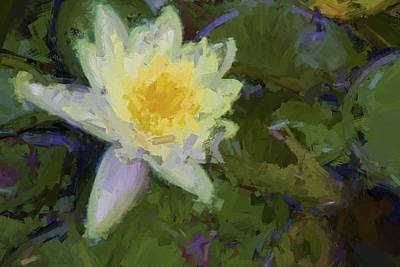 Photograph - Oh What A Water Lily by Alice Gipson