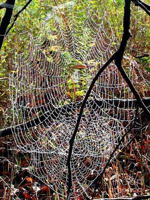 Photograph - Oh What A Web We Weave by Christian Mattison