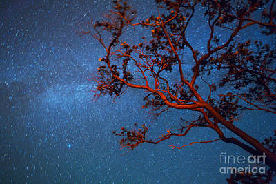 Photograph - Ohia Tree Branches And Milky Way Dhawaii by Douglas Peebles