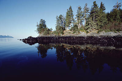 Exxon Valdez Photograph - Oil Marks At High Tide Mark Prince by Flip Nicklin