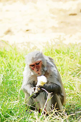 Oil Painting - A Monkey Eating An Ice Cream Art Print