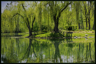 Photograph - Oil Painting Of Weeping Willows by LeeAnn McLaneGoetz McLaneGoetzStudioLLCcom
