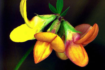 Mixed Media -  Yellow And Orange Trefoil  by Femina Photo Art By Maggie