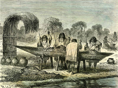Oil Drawing - Oil Production Of Turtle Eggs By Conibos 1869 Peru by Peruvian School