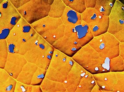 Oil Seed Rape Leaf (brassica Napus) Art Print by Ian Gowland