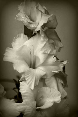 Photograph - Oil Style Antiqued Gladiolus by Jeanette C Landstrom