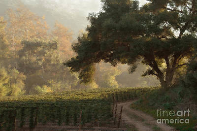Ojai Wall Art - Photograph - Ojai Vineyard by Kathleen Gauthier
